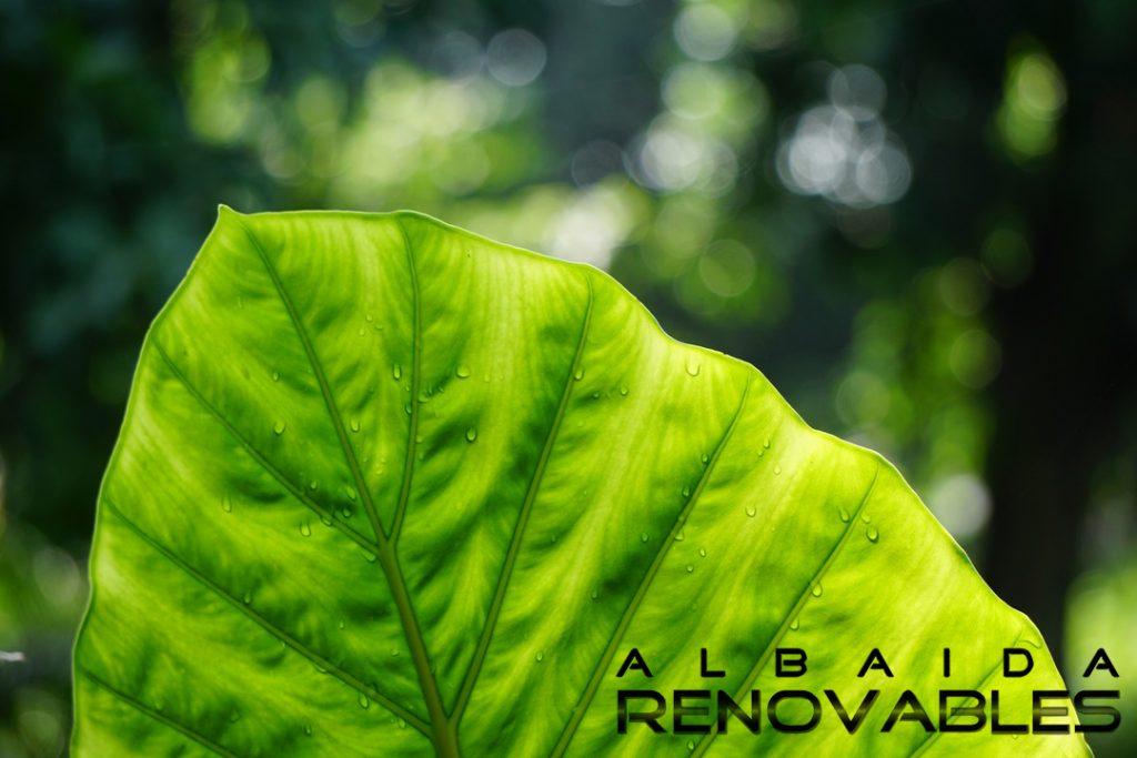 energias-renovables-biomasa-albaida
